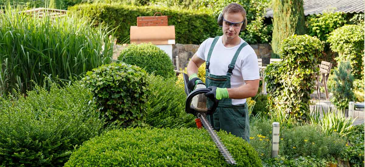 Garden & Yard Maintenance in Maitland